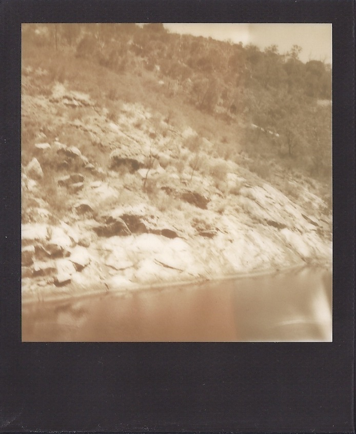 serpentine polaroidsb