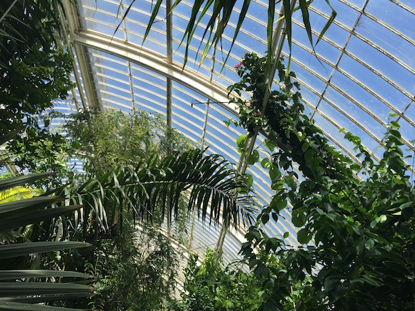 Kew Gardens 20 Palm House 7