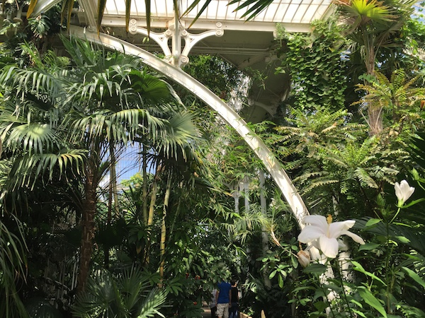 Kew Gardens 21 Palm House 8