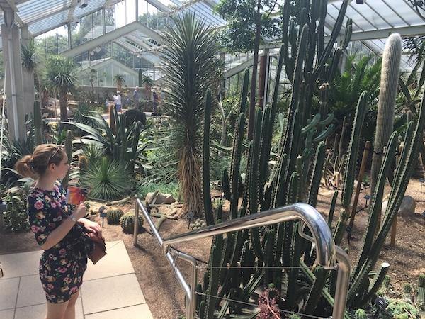 Kew Gardens 28 Princess of Wales Conservatory 2