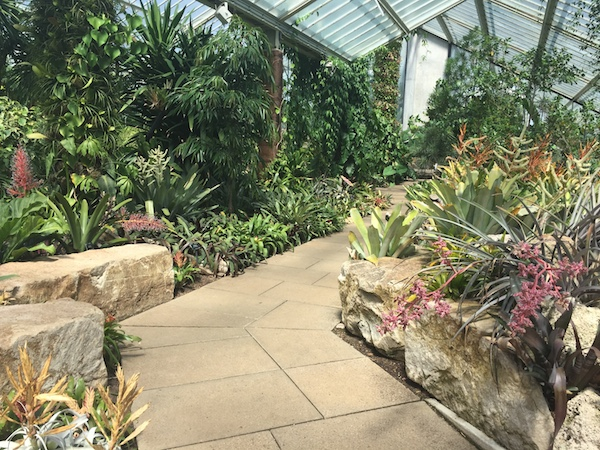 Kew Gardens 31 Princess of Wales Conservatory 5
