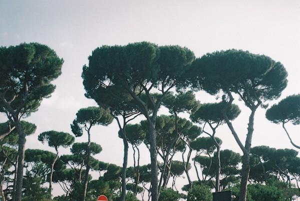 Rome Olympus Trip Film 12
